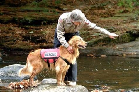 search dogs sar how search and rescue dogs work howstuffworks