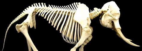 the elephant skeleton in our closet gaming news