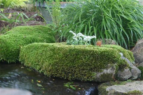 top 28 where can i buy moss for my garden 54 best images about growing moss indoors and out