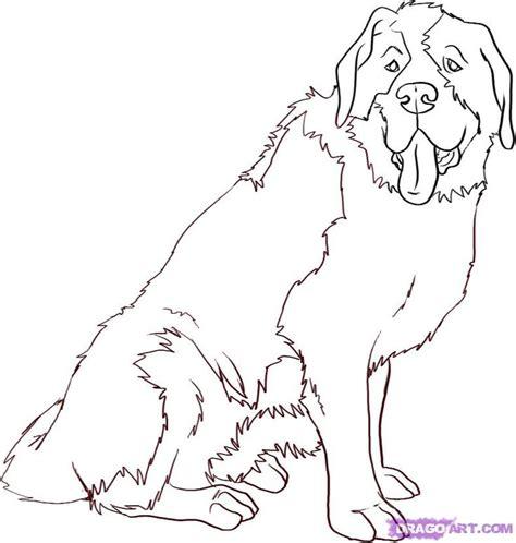 how to a st bernard st bernard search how to draw