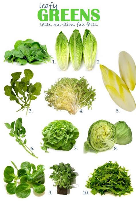 different type of leafy vegetable with name vegetable facts for