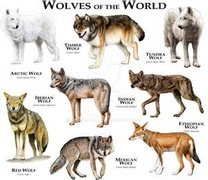 wolf colors wolves of the world by rogerdhall on deviantart