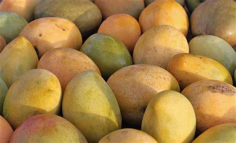 does jamaican mango and isla grow hair fast does jamaican mango and isla grow hair fast 4 bella
