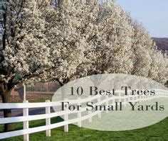 best trees to plant in your front yard gardening sized plants on evergreen