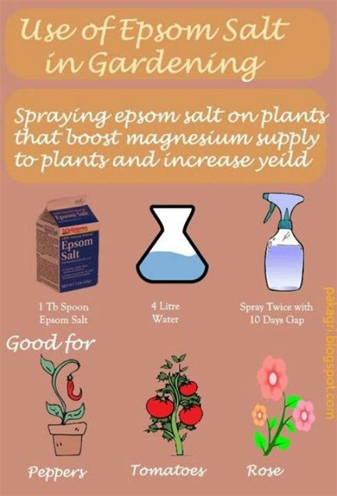 epsom salt for gardening for the home
