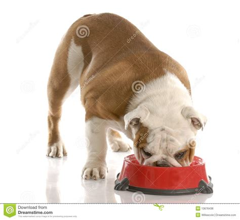 hungry puppies hungry puppy royalty free stock image image 13676436