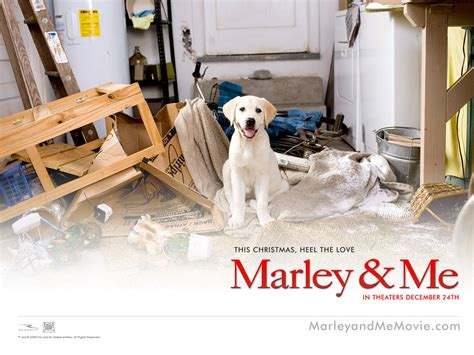 marley and me marley and me images marley me hd wallpaper and background photos 13563708