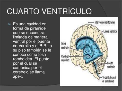 cuarto ventriculo ventr 237 culos cerebrales