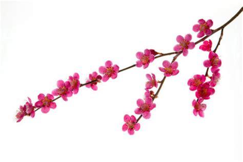 pink drawing pink flowers drawing 25 desktop background
