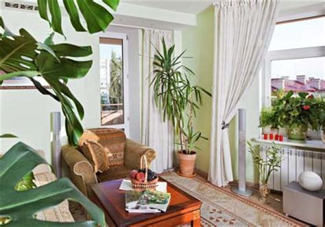 Plants For Living Room India How To Decorate Room With Indoor Plants Kerala