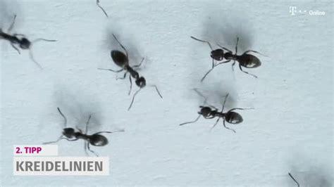 ameisen im rasen wirksam bek mpfen 2436 ameisen im wohnzimmer