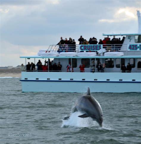 virginia aquarium dolphin watching boat trips pin by alexis rabon on aquatic adventures marine loves