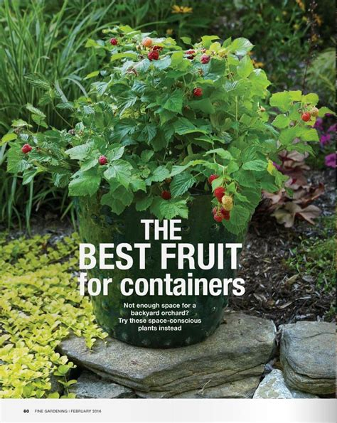container gardening fruit 17 best images about berries on the patio on