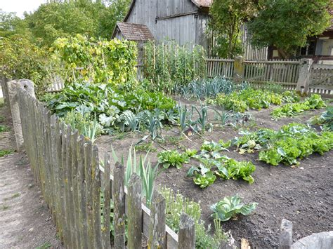 how to plan a vegetable garden planning your
