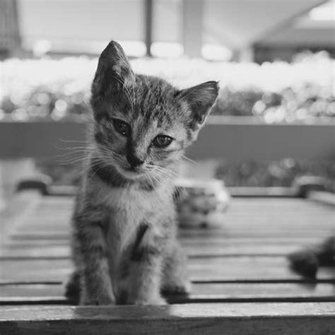 una noche un gato consejos para cuidar gatos peque 241 os