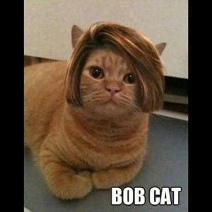 bob hair meme funny cat puns kappit