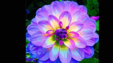 imagenes lindas de flores flores lindas youtube