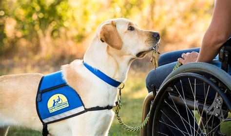 learn how to service dogs born for a of service florida currents florida currents