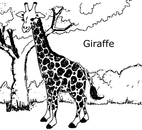 printable giraffe images free printable giraffe coloring pages for kids