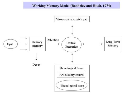 Memory Wstor what is memory and how does it work psychofed
