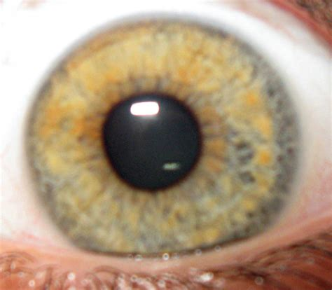 yellow eye color mixed that change shades green grey blue yellow
