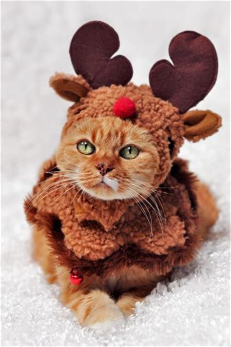 pug reindeer costume 625 best images about the well dressed cat on cats cats and