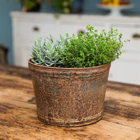 Large Zinc Planter by Large Aged Zinc Planter Plant Pot By Stupid Egg Interiors Notonthehighstreet