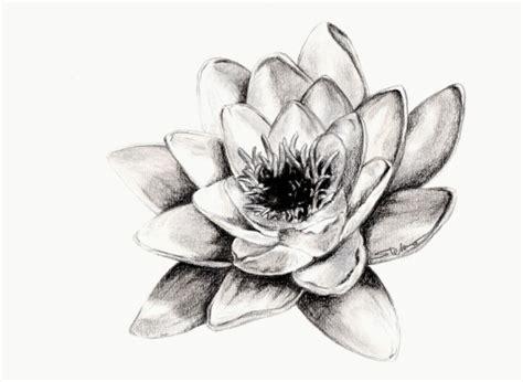 fiori disegnati a matita fiori disegni a matita buscar con disegni