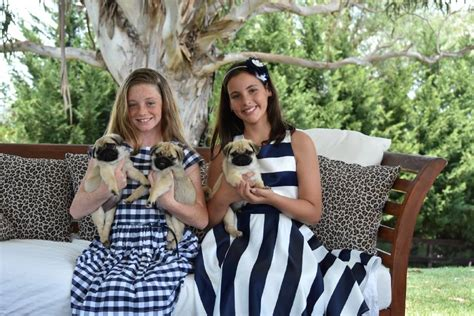 pug breeders nsw kennel council urges do your research cbelltown macarthur advertiser