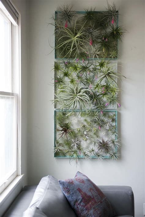 elegant ways  bring air plants   home