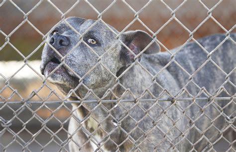 hawaii quarantine complaints spur closer look at hawaii animal quarantine station