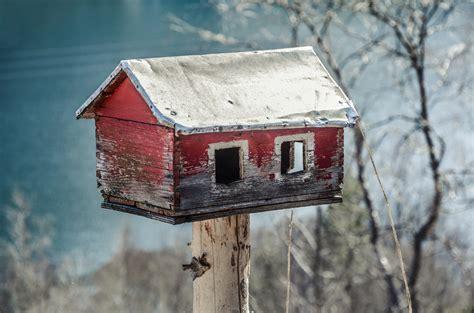 images feeder house bird feed tree food