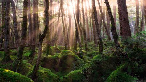 wallpaper 4k forest old forest sunrise 4k wallpaper