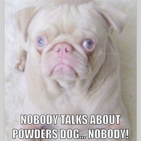 Albino Meme - pug albino meme pugs pinterest pug and memes