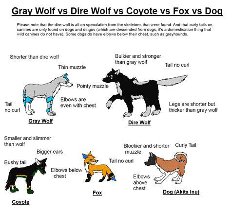 wolf vs canine dire wolf vs gray wolf vs coyote vs fox vs weasyl