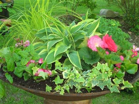 flowers for shade containers shade plants and sun
