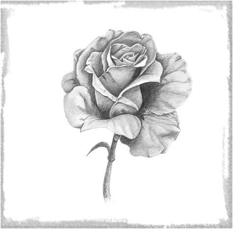 imagenes para dibujar a lapiz de rosas rosas para dibujar a lapiz faciles para dedicar dibujos