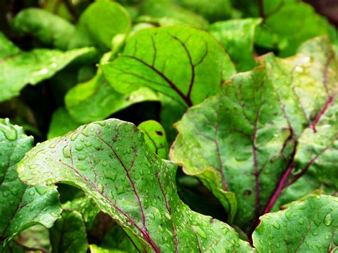 gren keaf produce types 6 vegetables that might save your huffpost