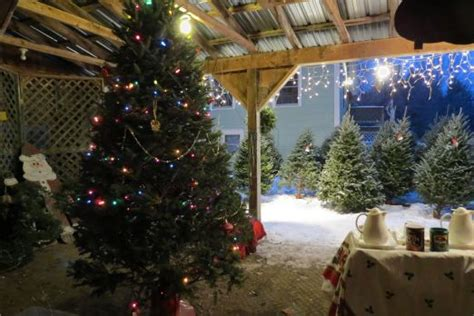 testers vermont christmas trees and farm antiques about us