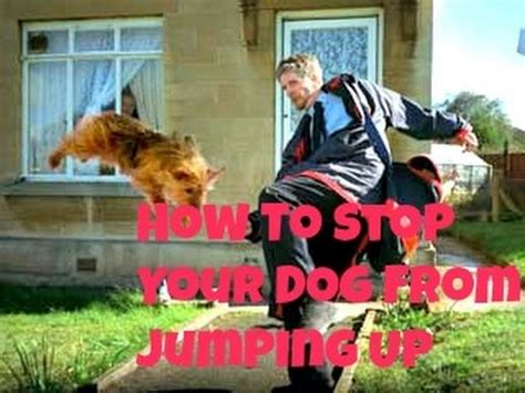 Stop From Jumping On by How To Stop Your From Jumping Up On You And Other