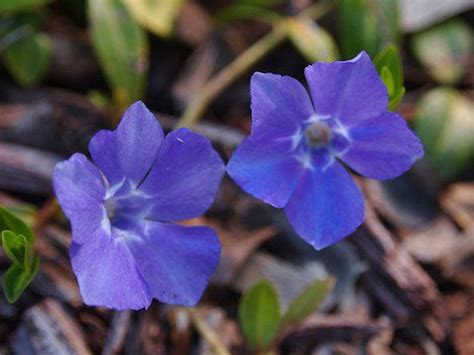 6 perennial plants to grow in poor soil the o jays