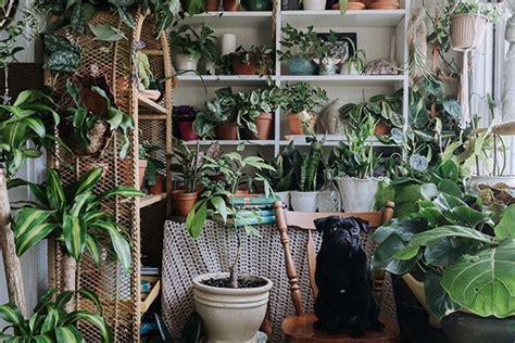 House Full of Plants? secret garden   Homes Halifax