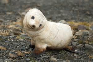the cutest animals in south america realwords