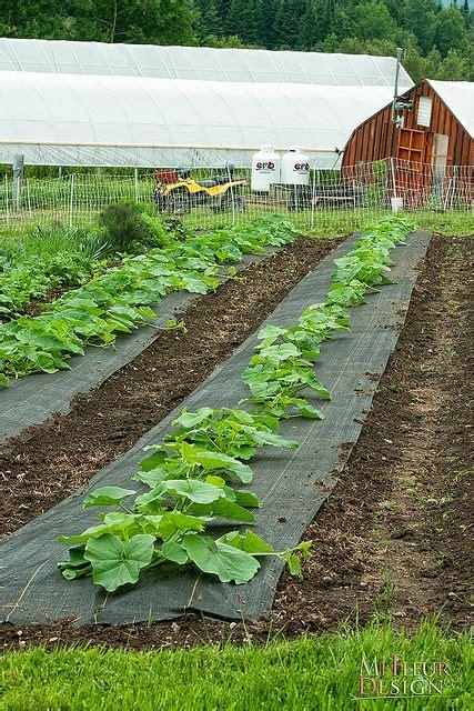 squashes   earth organic farm vegetable