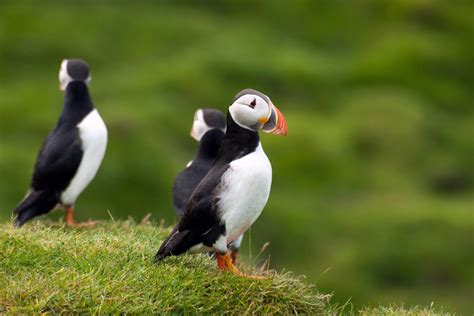 whales puffins in iceland holidays 2018 2019 luxury