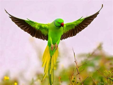 flying with one wing god s grace in our times of adversity books how to retrieve your lost parrot beautiful birds and wings