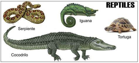 imagenes de animales reptiles caracteristicas de los reptiles reproducci 243 n respiraci 243 n
