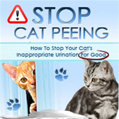 stop cat peeing on couch how to calm a dog s anxiety how to calm a fearful dog