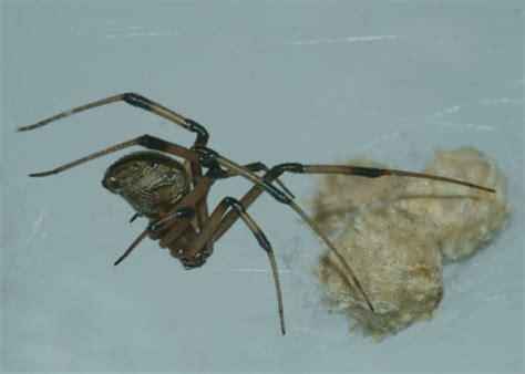 common backyard spiders xceedspeed