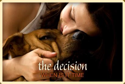 when to euthanize a with cancer peaceful endings for pets at home pet euthanasia hospice chicago suburbs
